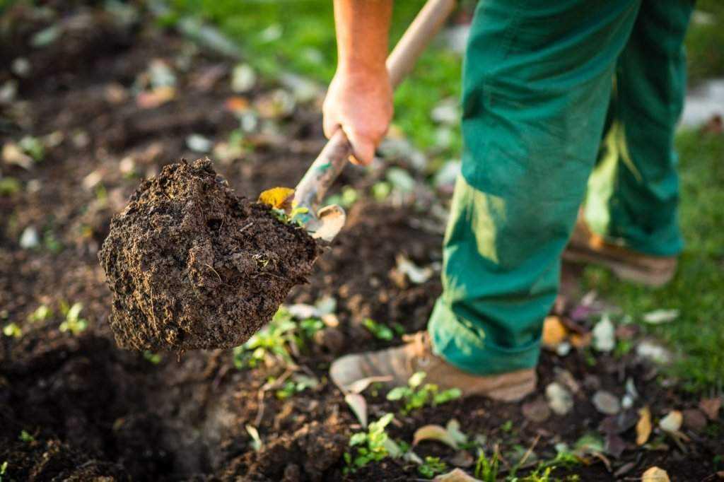 что лучше плодородный или растительный грунт